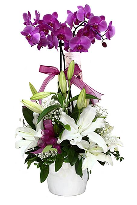 Pembe 2 dallı orkide