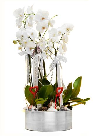 orkide 7 DAL  SÜPER İNDİRİM