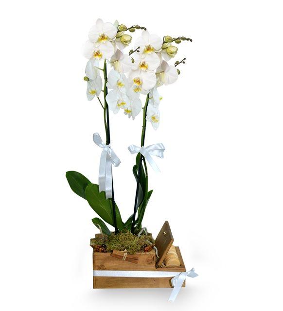 Ahşap Kutuda 2 Dal Beyaz Orkide