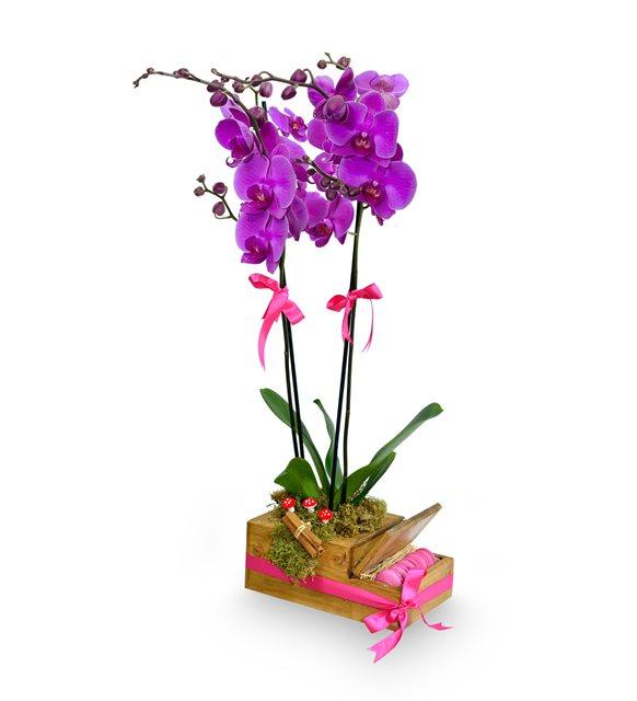 Ahşap Kutuda 2 Dal Mor Orkide