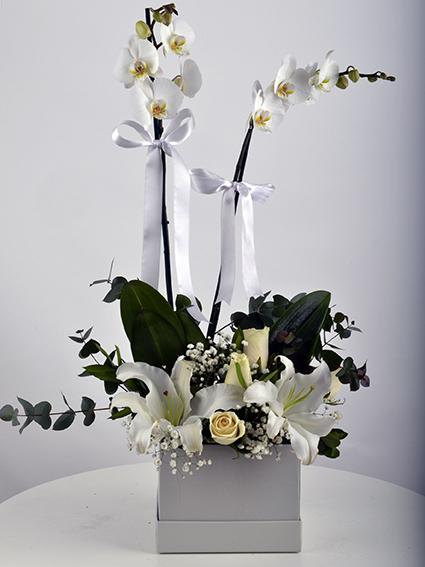 Kare kutuda 2 dal orkided