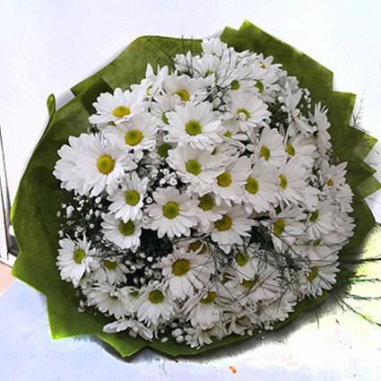 Kır çiçeği papatyalar