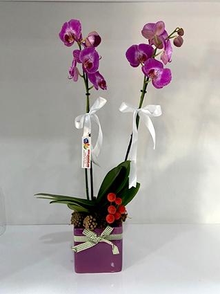 Masum Güzel Orkide