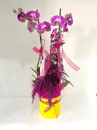 İki Dal Mor Orkide