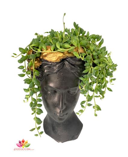 Helen Saksıda Tespih Çiçeği Terraryum
